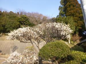 Kyoboku03